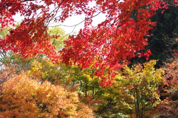 京都大原寂光院近辺の紅葉情報