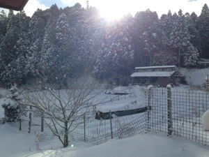 北の京から 2014冬