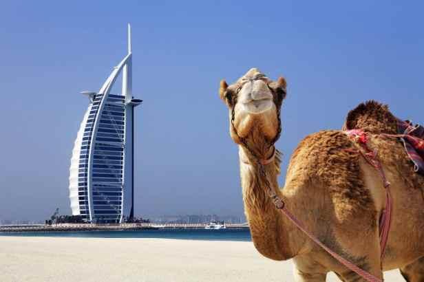 dubai camel burj al arab-xlarge.jpg