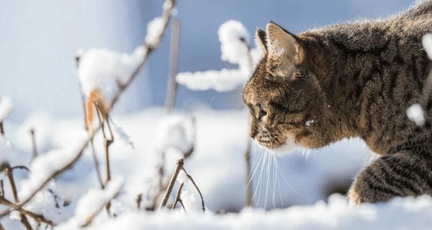 14 января - Сегодня середина зимы. Перезимье
