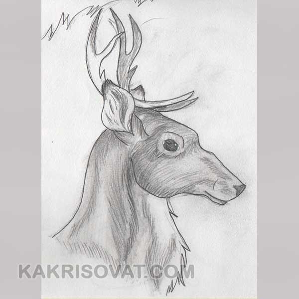 Рисунки для срисовки лёгкие и красивые животные милые и раскрашенные