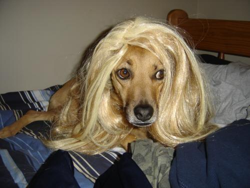 Blondinė 2