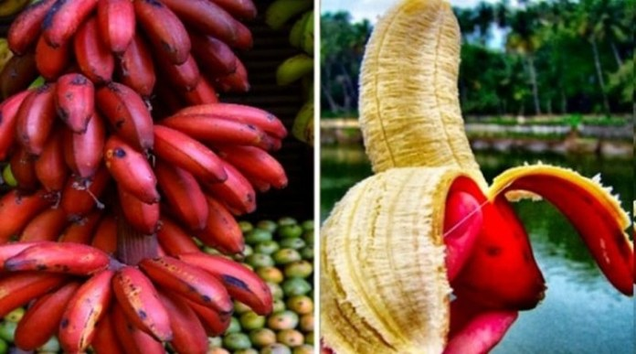 The Benefits of Red Banana