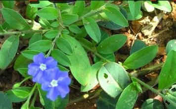 Vishnukiranthi Medicine : Health Tips, Beauty Tips, Daily Health Tips, Tamil Maruthuvam Tips, Top 10 Best Health Benefits, Easy To Follow Daily Health Tips