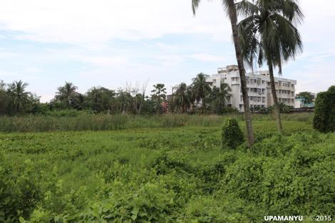 Patuli Landscape 2