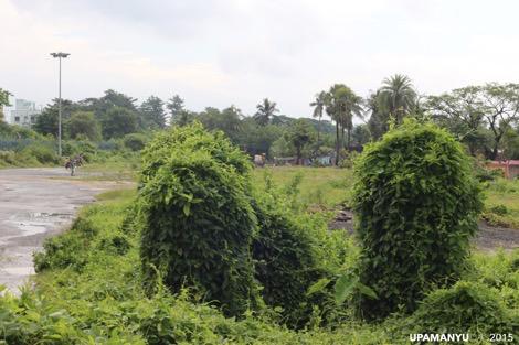 Patuli Landscape 3