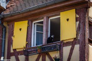 Colmar-IMG_2653