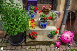 Eguisheim-IMG_2498