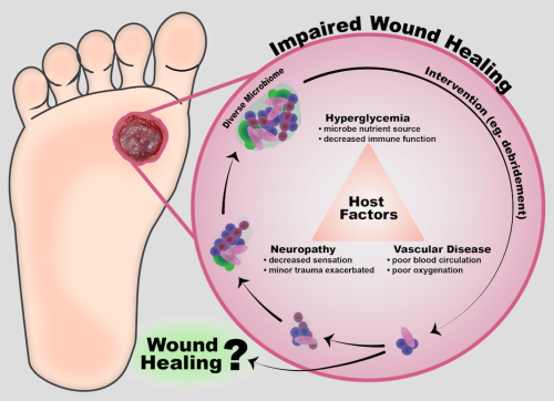 small resolution of cutaneous wound infection is a challenge that has been exacerbated by antibiotic resistance older adults and chronic disease populations such as those