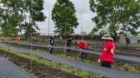 Sujiwo dan SAC Gotong Royong Bersihkan Balai Benih DPD PDI-P Kalbar