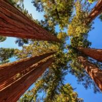 UPPDATERAD!  Kommunfullmäktige i november - budget och trädinventeringar