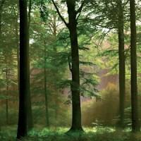 Nytt naturreservat vid Garnudden