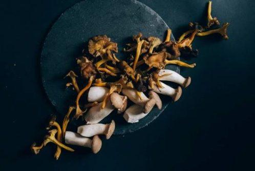 Mushrooms on Black.  Image by Olya Kobruseva.