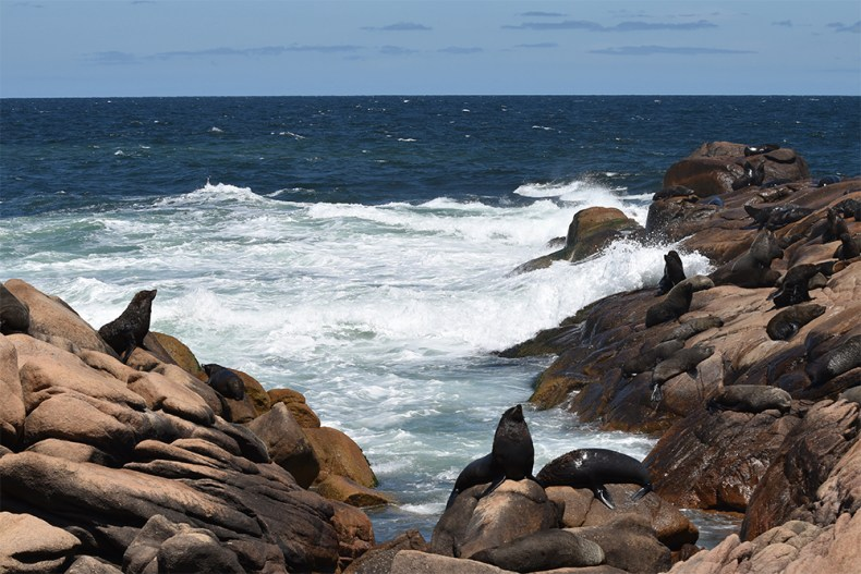 sealion-colony-layers-cabo-polonio-resized
