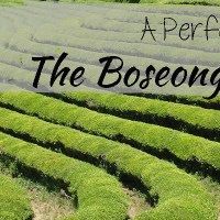 A Perfect Day at the Boseong Tea Fields