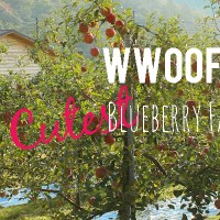 WWOOFing on the Cutest Little Farm in Korea