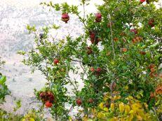 Sweet, sweet pomegranates