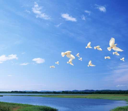 ptaki w locie nad jeziorem
