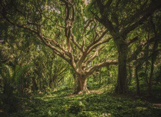 maraton drzewo szczęścia emma lange