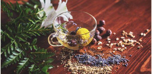echinacea, homeopatia, zioła Emma Lange