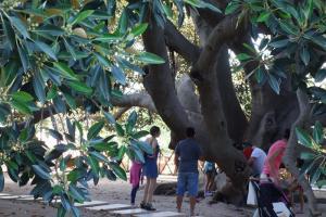 Cagliari, Park