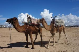 Essaouira, Schiffe der Wüste