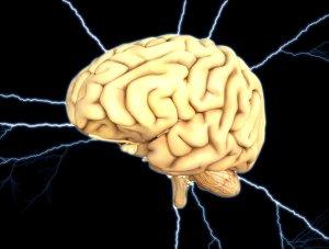 brain-1845940_1920-1