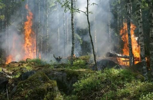 δασικη πυρκαγια