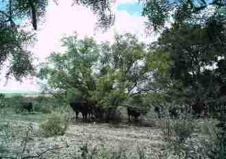 Someone's Herd