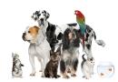 Οι Δήμοι αναλαμβάνουν τα ζώα συντροφιάς