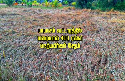400 acres of paddy fields damaged by rain near Paapanasam