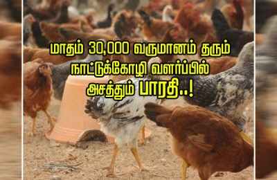 Chicken farming