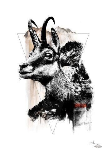 """Rupicapra Rupicapra"" (Die Gämse) – Illustration aus der Serie HelvEdition von Ka L-O-K   Graphic Arts"