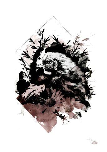 """""""Gallus Gallus"""" (Die Henne) – Illustration aus der Serie HelvEdition von Ka L-O-K   Graphic Arts"""