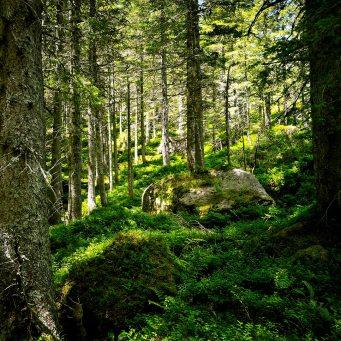 Mystical Woods | Photo by Ka L-O-K