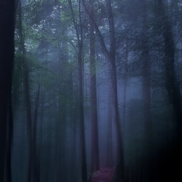 Moody Woods - Mystical Fog | Ka L-O-K