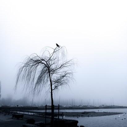 Lonely Crow | Photo by Ka L-O-K