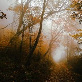 Morning Walk | Photo by Ka L-O-K
