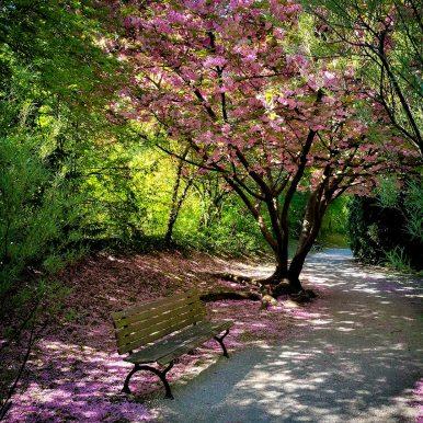 Take a seat under the blossom by Ka L-O-K