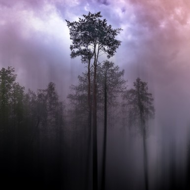 Moody Woods after the storm - by Ka L-O-K