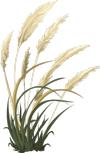 Proteiner i kornprodukter