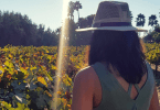 Ruta del Vino en Valle de Guadalupe México