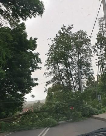 Drzewo na drodze przy przejeździe kolejowym w stronę Przytkowic - fot. Facebook - Patrole, wypadki... | Dominik