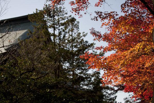 紅葉の季節には境内のそこかしこが色づきます。