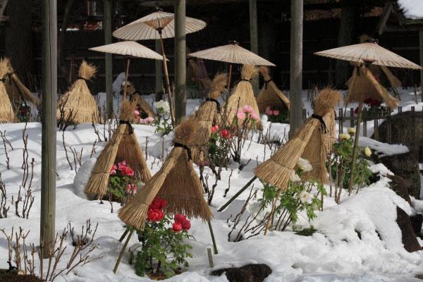 神苑牡丹園。このくらい雪が降ってくれると雪に厚みがあり、美しさが増します。