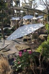 神苑牡丹園。4月〜5月中旬、春の見頃を迎えた牡丹。印象深いのは雪化粧ですが、春の陽光とともに見るのもまた心地よいです。傘の花も映えます。