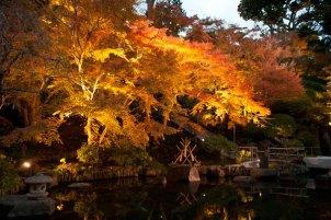 ライトアップされた山門付近の紅葉。手前の池が紅葉を引き立てます。
