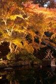 毎年紅葉の時期に行われるライトアップ。とてもきれいです。
