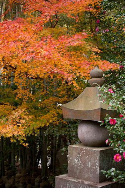 紅葉、竹林、五輪塔、つばきと贅沢な組み合わせ。