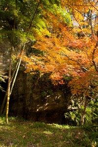 海蔵寺の門前、底脱ノ井の後ろも色づいていました。